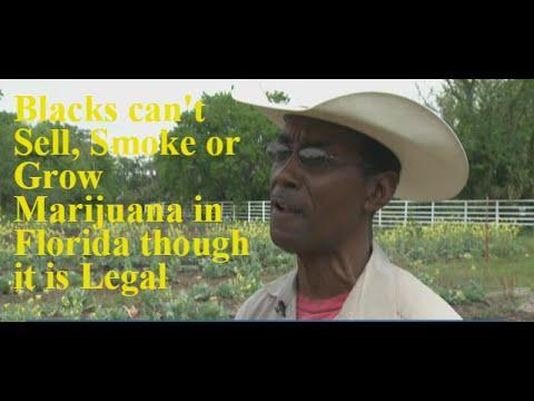 Complex Florida marijuana laws
